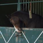 Aktivní dovolená v koňském sedle